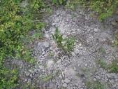 香草姐的快樂花園(過去式):種掛一株香蜂草。