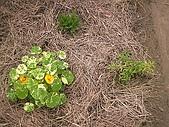 香草姐的快樂花園(過去式):2010010401.jpg