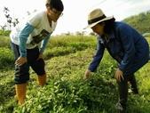 香草姐的快樂花園(現在式):這裡也種了幾種薄荷
