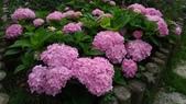香草姐的快樂花園(現在式):週六日到藍陽花園則是放鬆的心情。