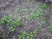 香草姐的快樂花園(過去式):2010011502.jpg