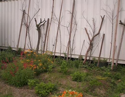 香草姐的快樂花園(過去式):2010032201.jpg