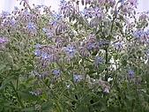 香草姐的快樂花園(過去式):2010040201.jpg