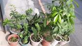 拈花惹草:小小花園
