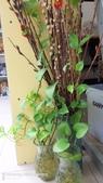 拈花惹草:多年的銀柳
