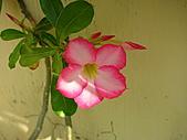 拈花惹草:開花了