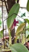 拈花惹草:不知名的蘭花