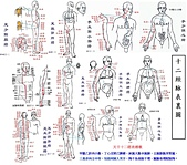 中醫:12 經脈.jpg