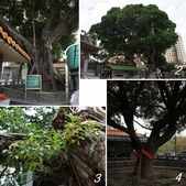 網誌四格圖:北屯 三分埔 福德廟雙榕樹 與 松竹寺老樹群
