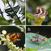 網誌四格圖:草山觀蟲