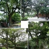 網誌四格圖:宜蘭設治館 & 老樹群