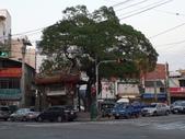 旅遊.景點(二):沙鹿 三角公園 觀音廟&老榕樹