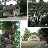 網誌四格圖:台南公園