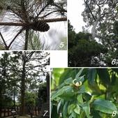 網誌四格圖:新社種苗場 老樹群