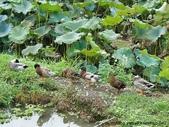 圖片:雙溪 內坪林