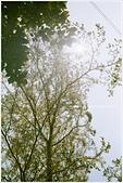 Leica minilux 初體驗:26660032.JPG-.jpg