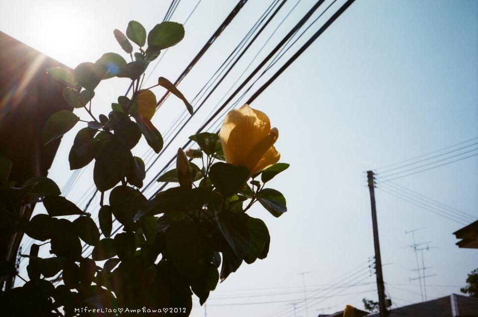 i ♥ Bangkok:Amphawa_64780001.JPG
