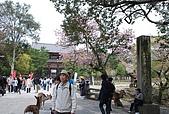 關西の百選春櫻饗宴 DAY7 奈良宇治 080412:東大寺前