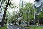 關西の百選春櫻饗宴 DAY5 大阪難波 080410:御堂筋