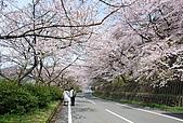 關西の百選春櫻饗宴 DAY4 滋賀琵琶湖一圈 080409:海津大崎 かいづおおさき
