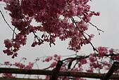 關西の百選春櫻饗宴 DAY2 京都 080407:半木の道