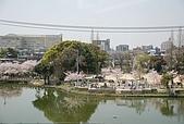 關西の百選春櫻饗宴 DAY1 京都 080406:櫻花亂亂開