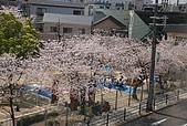 關西の百選春櫻饗宴 DAY1 京都 080406:國民運動