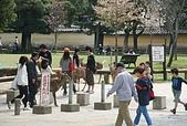 關西の百選春櫻饗宴 DAY7 奈良宇治 080412:奈良公園