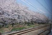 關西の百選春櫻饗宴 DAY1 京都 080406:鐵道
