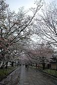 關西の百選春櫻饗宴 DAY2 京都 080407:醍醐寺