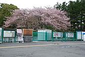 關西の百選春櫻饗宴 DAY5 大阪難波 080410:万博記念公園
