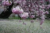 關西の百選春櫻饗宴 DAY2 京都 080407:醍醐寺霊宝館