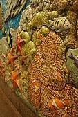 美國紐約舊金山 DAY7 自然歷史博物館+中央公園:005.jpg