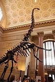 美國紐約舊金山 DAY7 自然歷史博物館+中央公園:014.jpg