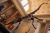 美國紐約舊金山 DAY7 自然歷史博物館+中央公園:015.jpg