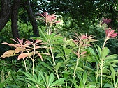 2006加拿大洛磯山脈:358 - 維多利亞-布查花園 (4)