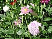 2006加拿大洛磯山脈:362 - 維多利亞-布查花園 (8)