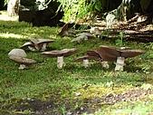 2006加拿大洛磯山脈:370 - 維多利亞-布查花園 (16)