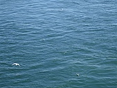 2006加拿大洛磯山脈:337 - BC Ferries (4)