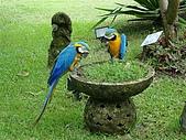 夏の墾丁:凱撒的鸚鵡