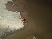 夏の墾丁:夜遊遇見螃蟹逛大街