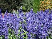 2006加拿大洛磯山脈:377 - 維多利亞-布查花園 (23)
