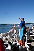 2008澳洲-黃金海岸:鵜鶘=大嘴鳥 (08) 餵食中.JPG