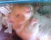 家鼠們:IMG0159A
