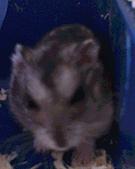 家鼠們:IMG0163A