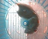 家鼠們:IMG0169A