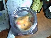 家鼠們:罐裝鼠