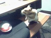 家鼠們:IMG0005A