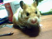 家鼠們:IMG0006A