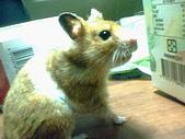 家鼠們:IMG0007A